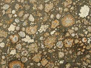 En esta foto podemos ver los cóndrulos, esa especie de circulitos irregulares.
