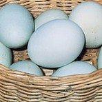 Aquí tenemos una muestra de huevos azules.